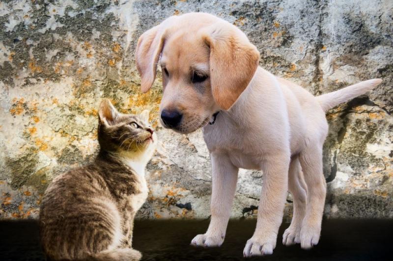 Quali animali possono stare in condominio?